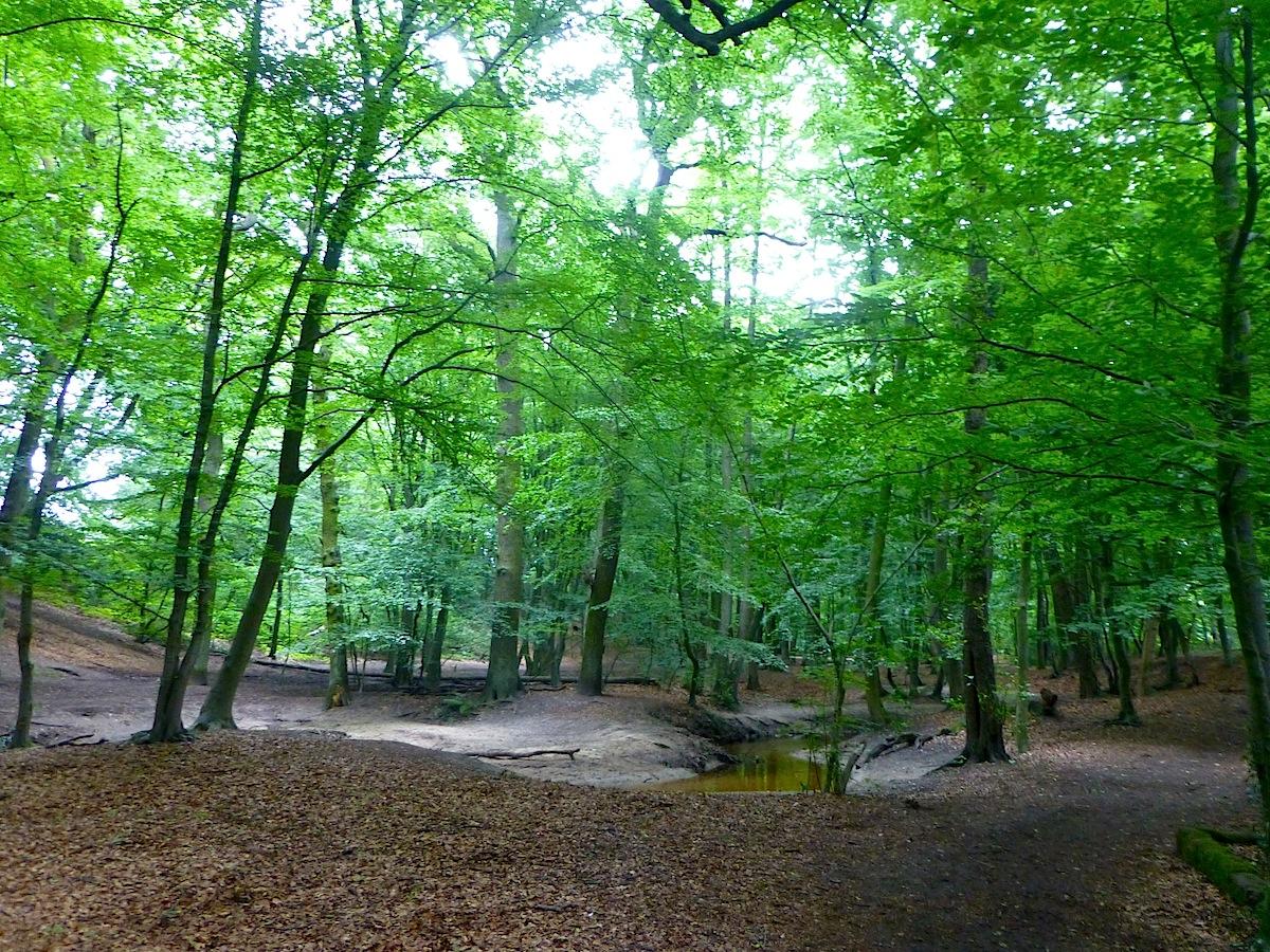 Spaziergang durch Bremen-Blumenthal: Nicht nur in 'Wätjens Park' kann der Besucher so richtig durchatmen...